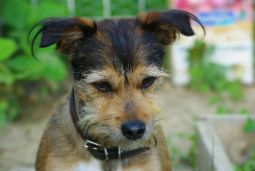 encyclopédie des races canines remarquables
